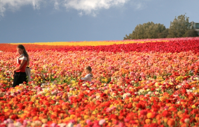 Carlsbad-Flower-Fields-mother-with-daughter-sea-of-flowers